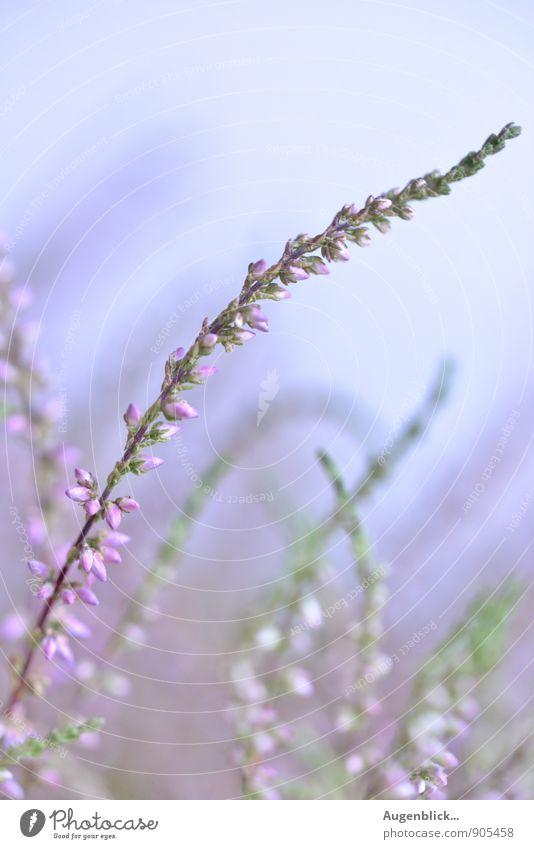 Draußen... Natur Sommer Schönes Wetter Wildpflanze Wiese Feld fallen genießen frei frisch authentisch Inspiration ruhig Außenaufnahme Tag