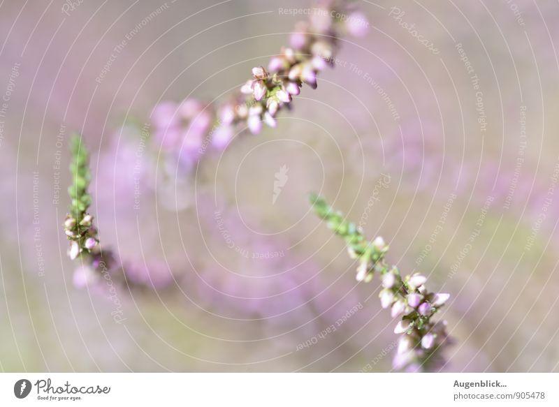Zweiundzwanzigsteroktober...9 Natur Sommer Herbst Schönes Wetter Blüte Wildpflanze Zufriedenheit Lebensfreude Frühlingsgefühle friedlich Gelassenheit