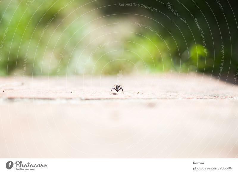Facing the jungle Tier Wildtier Ameise Insekt 1 sitzen warten klein grün ruhig einzeln Einzelgänger Einsamkeit beobachten Farbfoto Gedeckte Farben Außenaufnahme