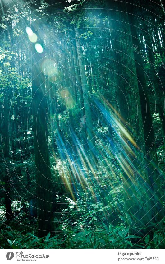 Der Wald strahlt! Umwelt Natur Landschaft Pflanze Urelemente Luft Sonne Sonnenlicht Schönes Wetter Baum Sträucher Farn Urwald Japan Asien Honshu leuchten