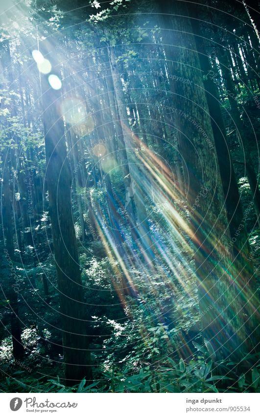 Licht bricht Umwelt Natur Landschaft Pflanze Luft Sommer Schönes Wetter Wärme Baum Wildpflanze Wald Ferien & Urlaub & Reisen träumen Lichtschein Lichtspiel