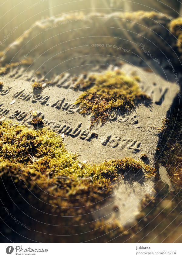 Jüdischer Friedhof, Frankfurt Natur alt Pflanze grün ruhig Winter Traurigkeit Senior Herbst Tod grau Stein Stimmung braun Schriftzeichen Vergänglichkeit