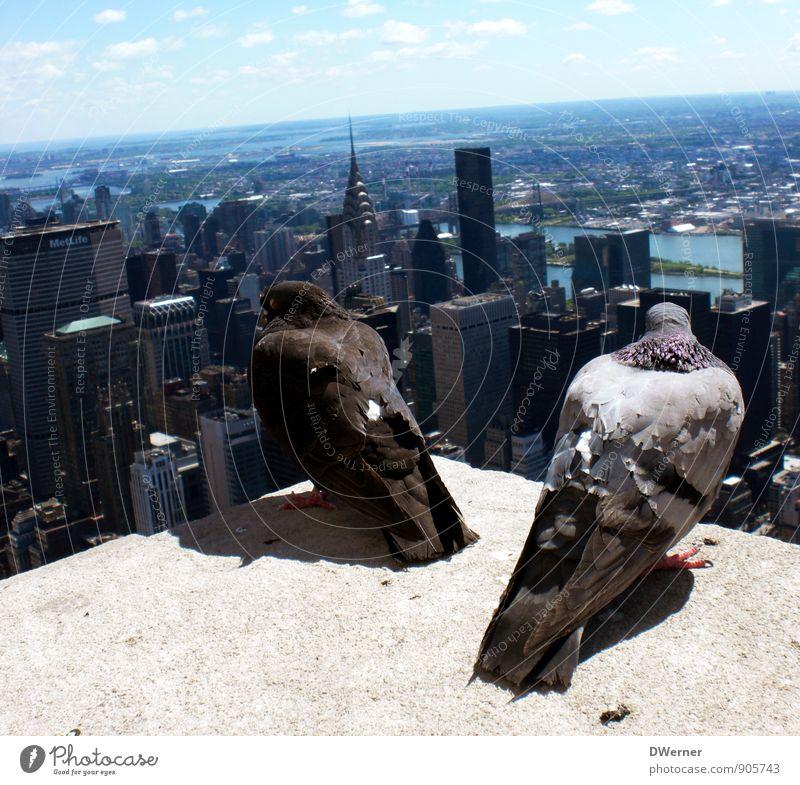 Über den Dächern von NY Himmel Ferien & Urlaub & Reisen Stadt Tier Ferne Architektur Gebäude Freiheit springen Horizont Fassade Wohnung Häusliches Leben modern