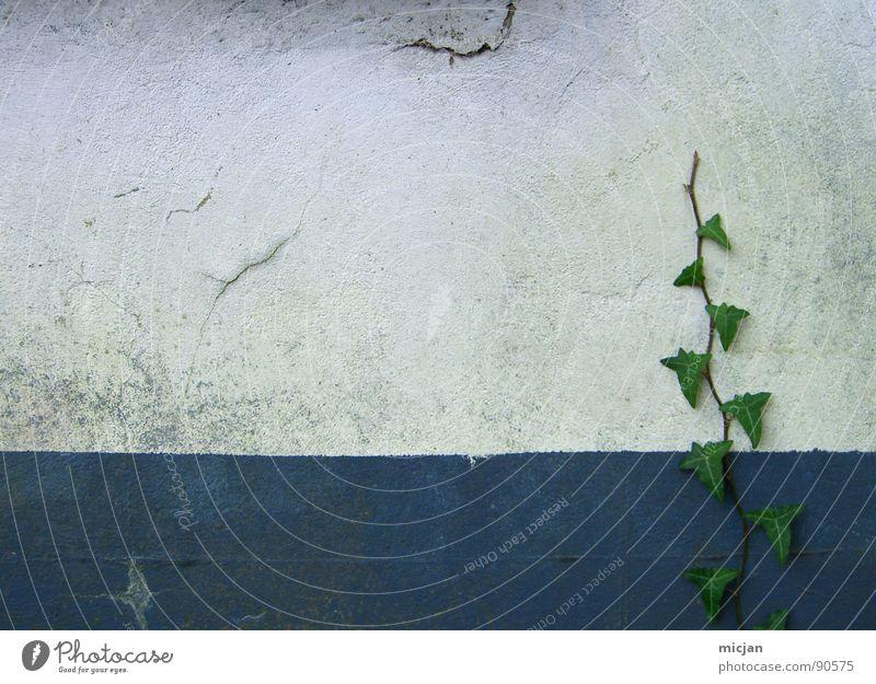 MauerLove Natur alt weiß grün blau Pflanze Blatt Haus Wand Mauer Gebäude Raum frei Wachstum Platz Vergänglichkeit