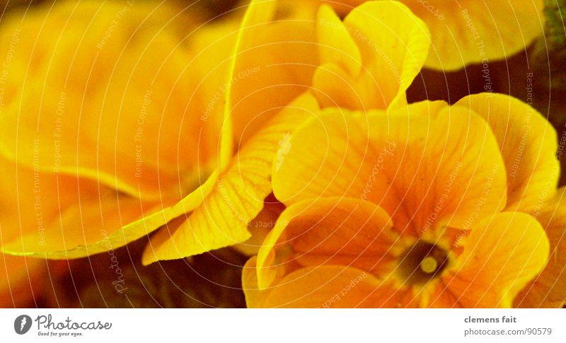 schönes Gelb,oder? gelb Blüte Frühling