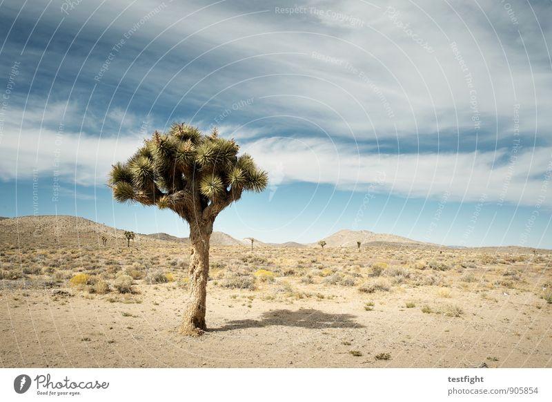 gegend Himmel Natur Ferien & Urlaub & Reisen Pflanze Sommer Sonne Landschaft Wolken Tier Ferne Umwelt Wärme Sand Luft Wetter wild