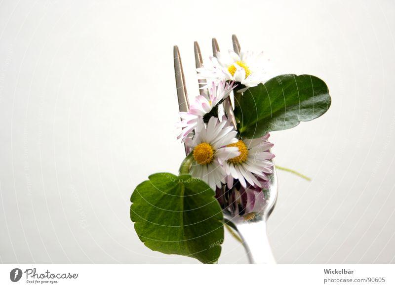 nicht schon wieder Grillfleisch..... Pflanze Blume Wiese Frühling Bewegung Gesundheit Kraft Lebensmittel frei frisch Ernährung genießen zart Gastronomie dünn
