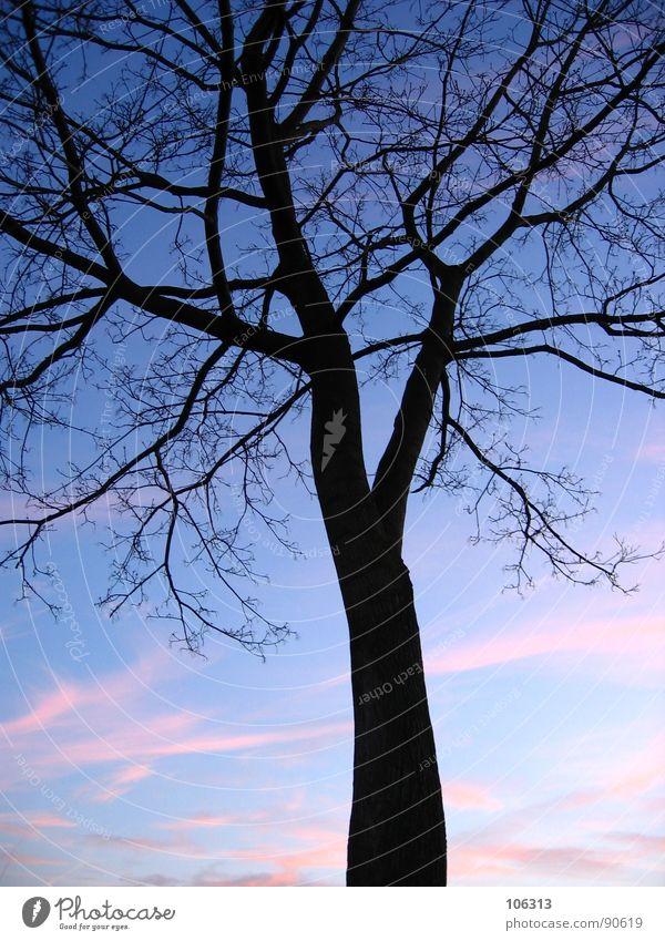 FEMININES ADERWERK oder (c) [NETZWERK] Himmel Natur Baum Sonne Wolken schwarz Holz Park Netzwerk Dach Ast Flüssigkeit Gesellschaft (Soziologie) Verbindung