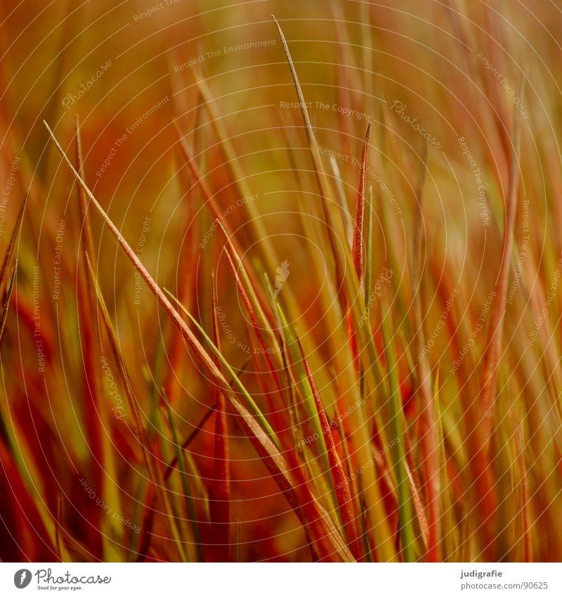 Gras Natur Sommer gelb Wiese Gras Linie orange Wind gold Spitze Stengel Halm