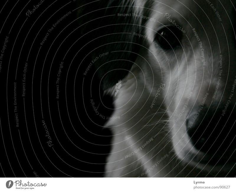 Hundeweisheit ruhig Freundschaft Auge Nase Tier Fell Haustier schwarz weiß Schnauze besinnlich Hängeohr Schwarzweißfoto