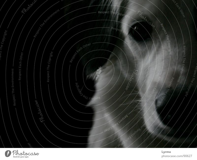 Hundeweisheit weiß ruhig schwarz Auge Tier Freundschaft Nase Fell Haustier Schnauze besinnlich Hängeohr