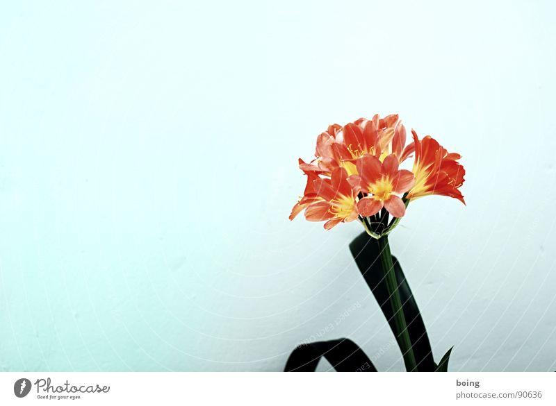 Entspannung für Eingespannte Blume Freude Blüte Denken frisch Blühend Treppenhaus Flur Pollen gießen Fensterbrett Topfpflanze Blumenhändler Amaryllisgewächse