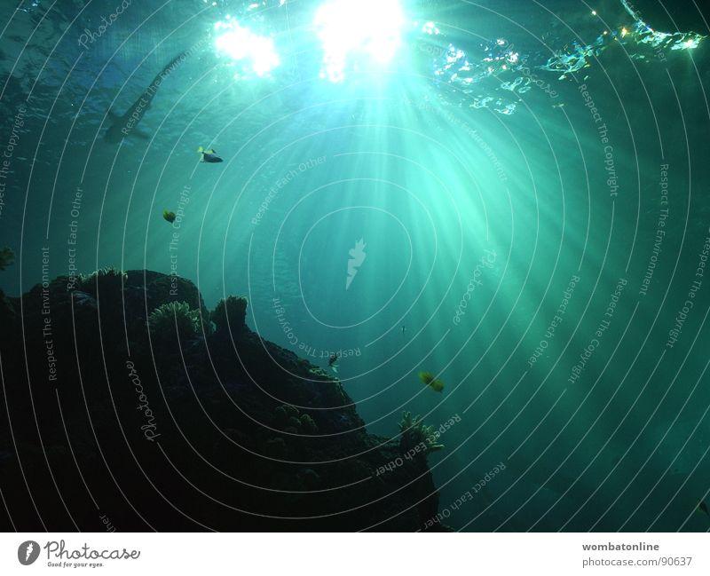 Ans Licht blau Wasser grün Sonne Meer Beleuchtung Wasserfahrzeug Fisch tauchen Aquarium Haifisch