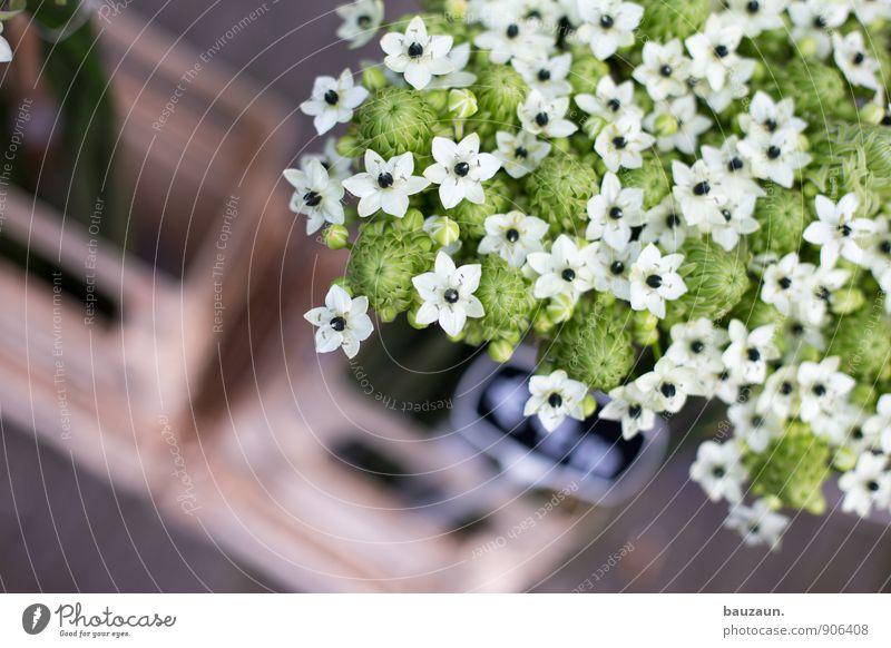 echt. Dekoration & Verzierung Gartenarbeit Pflanze Blume Blüte Stadt Marktplatz Blühend Wachstum schön grün weiß Marktstand Markthändler Blumenhändler Farbfoto