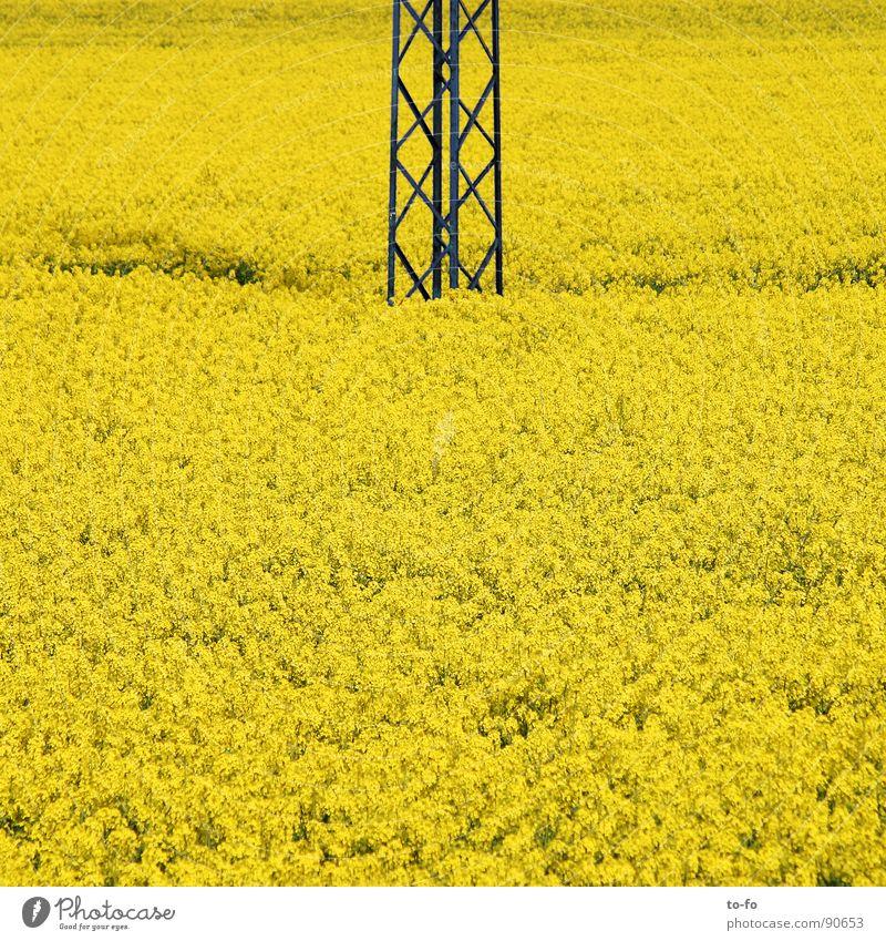 viel Biodiesel Raps Pflanze gelb grün Frühling Feld Rapsfeld ökologisch nachwachsender Rohstoff Landwirtschaft Honig Biene Blüte Erdöl Blühend Energiewirtschaft