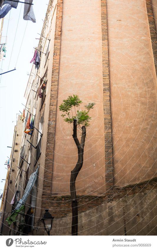 Mickriger Baum - Häuserschlucht - Barcelona Sommerurlaub Umwelt Stadt Menschenleer Haus Gebäude Hinterhof häuserschlucht Mauer Wand Fassade alt verblüht