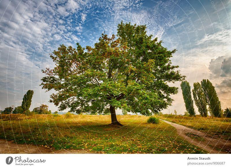 HDR - Baum - Landschaft Natur Himmel Sonnenaufgang Sonnenuntergang Sommer Herbst Schönes Wetter Ahorn Pappeln Park Wiese Wege & Pfade Wachstum ästhetisch