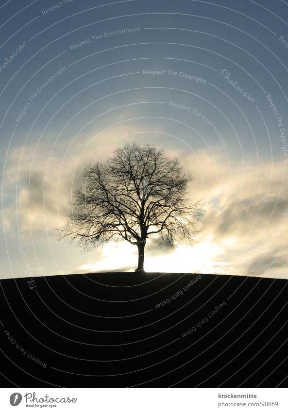 Traumbaum IV Wiese Gras Schweiz Jahreszeiten Ferne Laubbaum Wolken Baumstamm Umwelt Mitte Gegenlicht milder Winter Wind Natur Spaziergang Mittelpunkt Himmel Ast