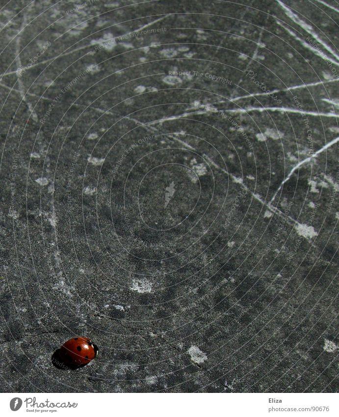 Künstlerisch begabt Marienkäfer Kunst Gemälde Linie rot Müdigkeit Glücksbringer Farbfleck grau Tier Kratzer Sommer Fröhlichkeit anstrengen Kunsthandwerk Stein