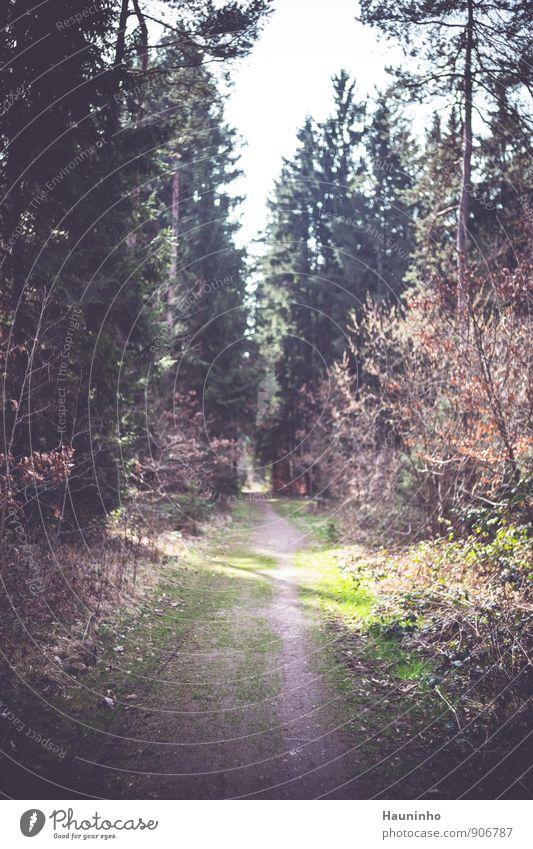 Waldweg Spaziergang wandern Umwelt Natur Landschaft Himmel Frühling Schönes Wetter Pflanze Baum Gras Sträucher Blatt Grünpflanze Wildpflanze Mischwald