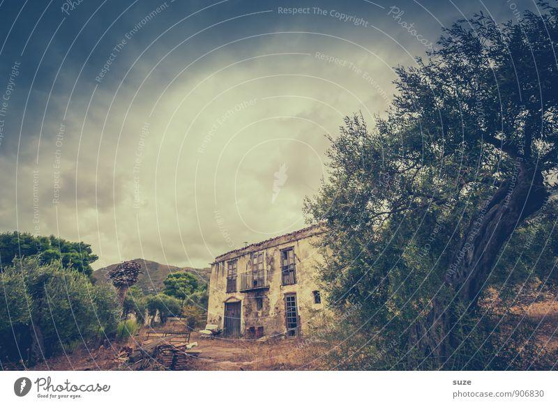 Das geht aufs Haus Natur Baum Ruine Bauwerk Gebäude Fassade alt authentisch dreckig dunkel fantastisch historisch kaputt trist trocken braun Stimmung Einsamkeit