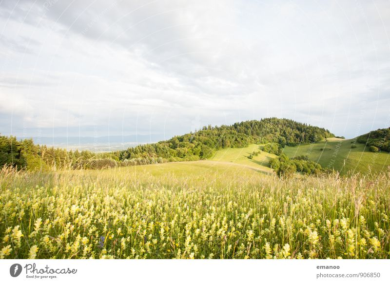 Kaiserstuhl light Himmel Natur Ferien & Urlaub & Reisen Pflanze grün Sommer Blume Landschaft Wolken Ferne Wald gelb Berge u. Gebirge Wiese Gras Frühling