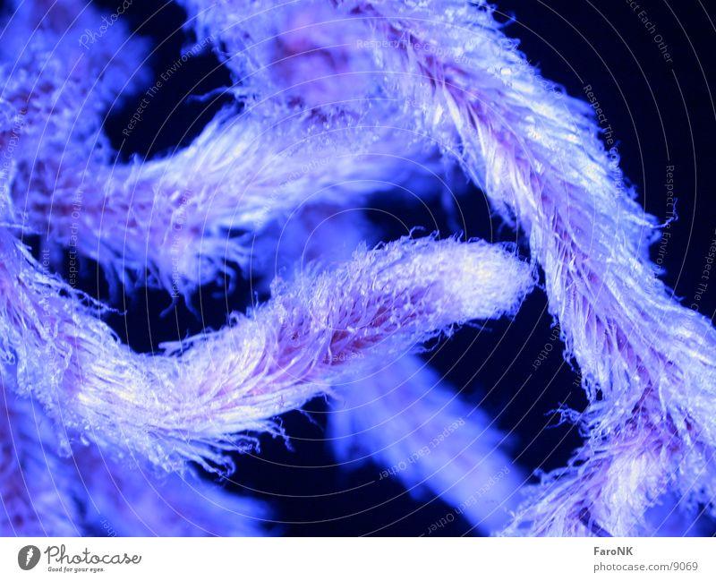 Wurzel blau Pflanze Haare & Frisuren Echte Farne