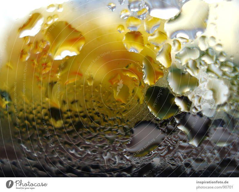 neulich beim duschen Wassertropfen Glasscheibe gelb grün schwarz Reflexion & Spiegelung Makroaufnahme Nahaufnahme Fensterscheibe beschlagene Scheibe