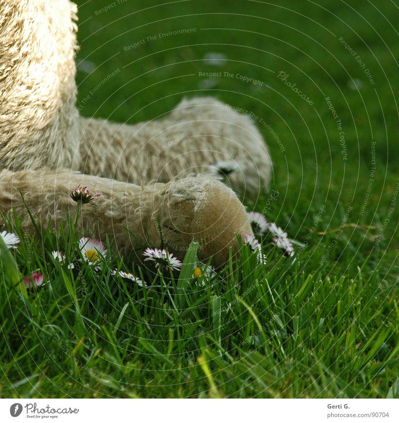 dumm rumsitzen alt Erholung Blume Tier dunkel Wiese Gras Kunst sitzen warten Rasen Spielzeug Fell Halm Langeweile Gänseblümchen