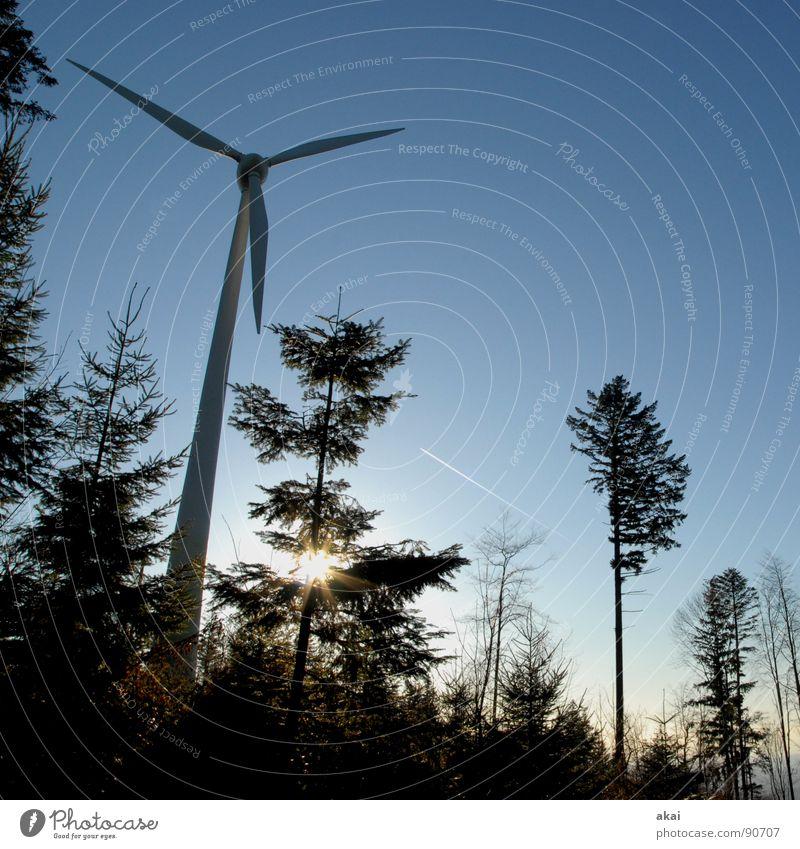 Windkraft am Roßkopf 3 Himmel Wald Linie Perspektive Energiewirtschaft Elektrizität Technik & Technologie Windkraftanlage Geometrie Paradies Waldlichtung Standort himmelblau Laubbaum Nadelbaum Nadelwald