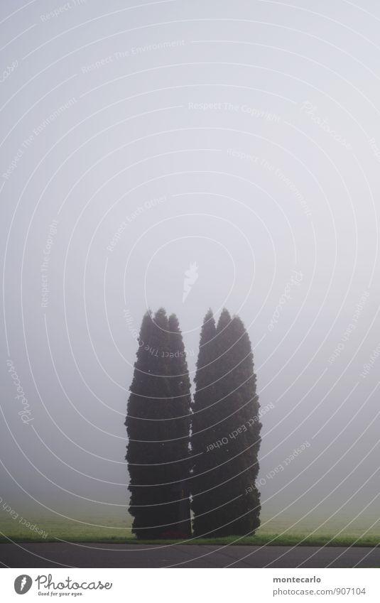 twins Umwelt Natur Landschaft Pflanze Erde Sonnenlicht Herbst Schönes Wetter Nebel Baum Gras Blatt Grünpflanze Wildpflanze Wiese Feld Beton Holz Zeichen Kreuz