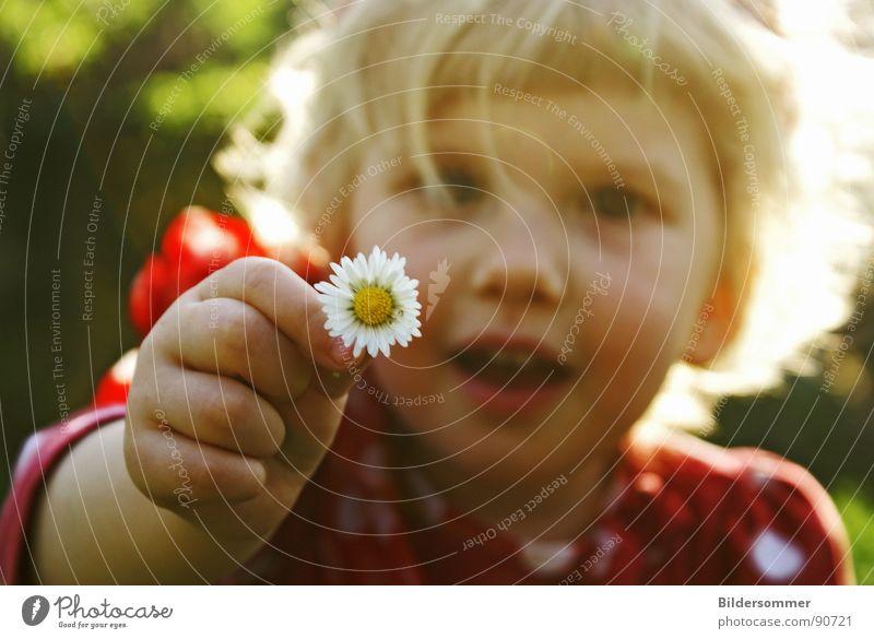 Daisy Kind Mädchen Sonne Blume rot Wiese lachen Haare & Frisuren blond klein Kreis Punkt Pullover Gänseblümchen Polkatänzer