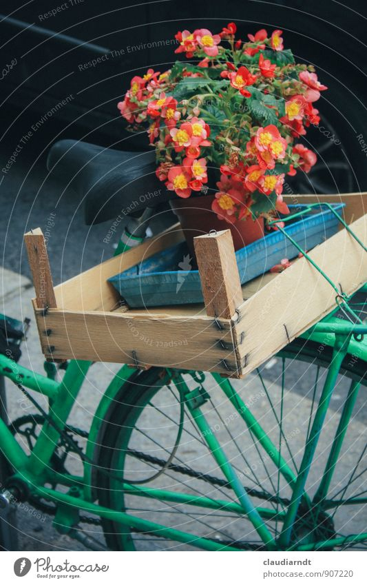 Begonien-Express Pflanze Blume Blüte Fahrradfahren grün rot Güterverkehr & Logistik Gepäckträger Fahrradsattel Kiste Holzkiste Fahrradkorb Blumentopf