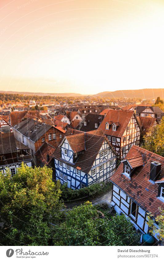 Über den Dächern Stadt grün weiß Sommer Baum Haus schwarz gelb Wand Herbst Frühling Mauer Gebäude braun Fassade orange