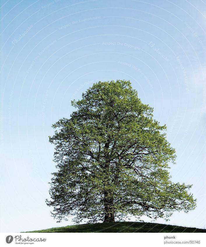 baumschnitt Natur Himmel Baum grün blau Frühling Gesundheit Wachstum Bodenbelag Hügel Naturliebe Reifezeit