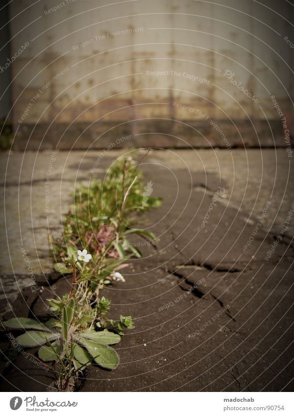 UNGEMÜSE Natur grün Pflanze Blume Einsamkeit Umwelt Kraft Beton Klima Wachstum Sträucher Asphalt verfallen trashig Lebensfreude