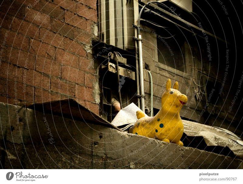die gelbe bestie alt Einsamkeit Tier Leben dunkel Wand Mauer Stimmung dreckig Pferd Industriefotografie Kitsch Dekoration & Verzierung Müll Vergänglichkeit