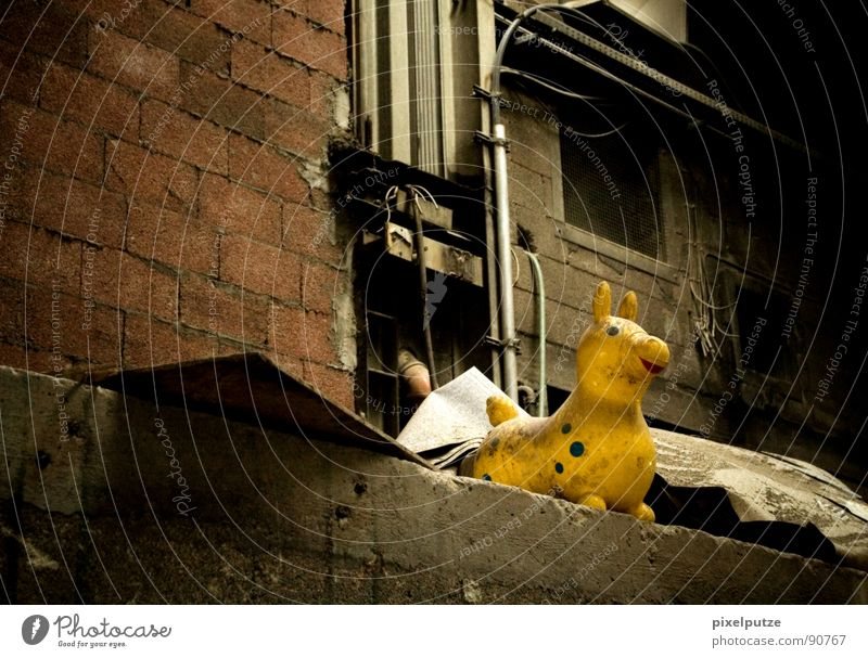die gelbe bestie alt Einsamkeit Tier Leben dunkel Wand Mauer Stimmung dreckig Pferd Industriefotografie Kitsch Dekoration & Verzierung Müll Vergänglichkeit Punkt