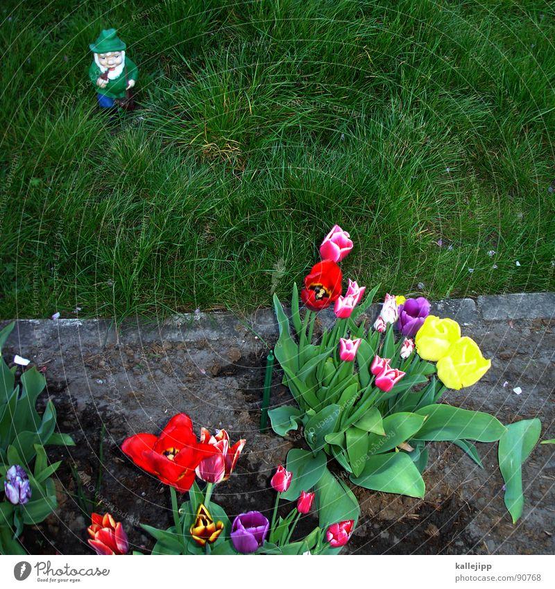 todesstreifen Blume Gras Garten Mauer Park maskulin Zeit Ordnung Wachstum Rasen Wandel & Veränderung Blühend Reichtum Vergangenheit Typ DDR