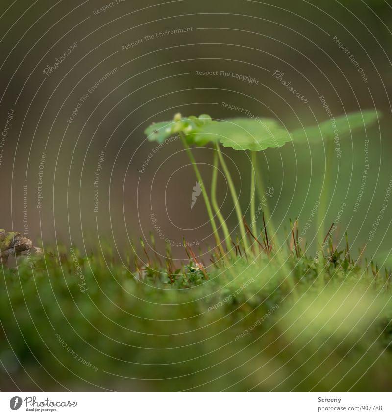 Regenschutz Natur Landschaft Pflanze Herbst Moos Blatt Wildpflanze Wald Wachstum klein grün Gelassenheit ruhig Schutz Farbfoto Makroaufnahme Menschenleer Tag