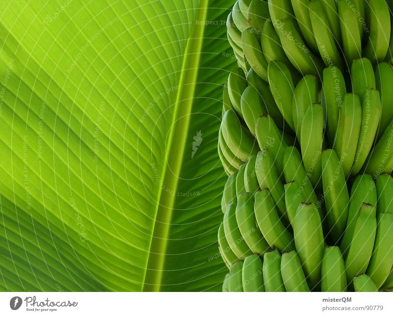 green banana Natur grün Ferien & Urlaub & Reisen schön Baum Farbe ruhig Erholung gelb dunkel Ernährung Lebensmittel See träumen hell Gesundheit