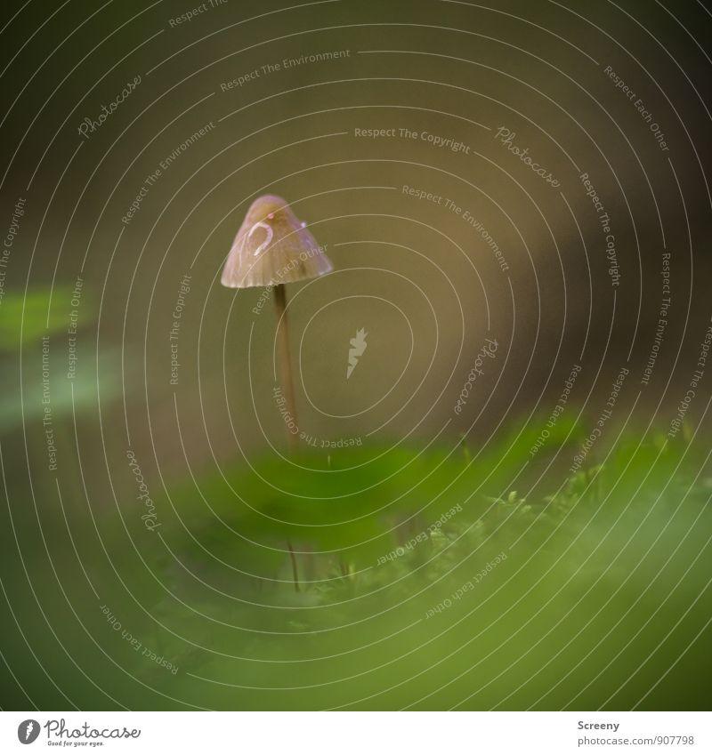 Ganz allein... Natur Pflanze grün Einsamkeit ruhig Wald Herbst Gras klein braun Wachstum Idylle Sträucher einzigartig Schutz Sicherheit