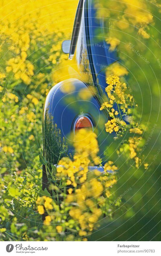 Karl der Käfer Spiegel Chrom gelb Rückspiegel Feld Frühling März Rücklicht Oldtimer Sauberkeit Physik Reflexion & Spiegelung Raps spiegeln blau PKW beetle old