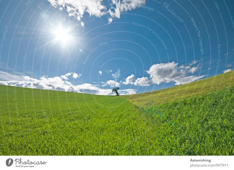 der Baum Umwelt Natur Landschaft Pflanze Luft Himmel Wolken Horizont Sonne Sonnenlicht Sommer Wetter Schönes Wetter Wiese Feld Hügel klein blau gelb grün weiß