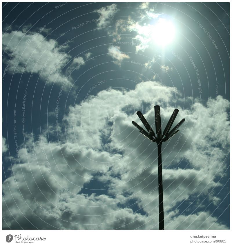 fleur Himmel blau weiß Sonne Wolken Blüte Beleuchtung Laterne Straßenbeleuchtung Verkehrswege