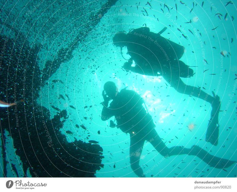 Under the Sea Malediven tauchen Ferien & Urlaub & Reisen Gegenlicht 2007 Physik kalt Freizeit & Hobby Schiffswrack Machafushi Wasser blau Schwimmhilfe Glück