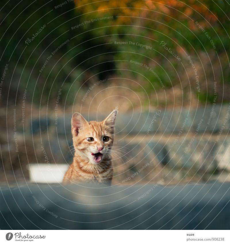 Eh, ich weiß wo du denkst mit ... Natur Tier Haustier Katze 1 Tierjunges authentisch Coolness frech schön klein lecker lustig natürlich Neugier niedlich wild
