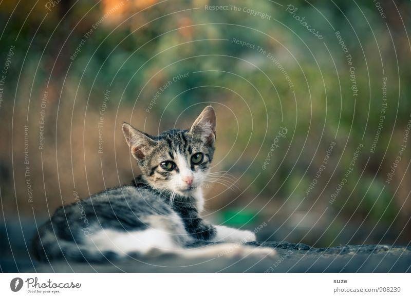 Mafia-Mia-Miez Natur Tier Haustier Katze 1 Tierjunges liegen warten authentisch schön klein natürlich Neugier niedlich wild Italien Sizilien einheimisch