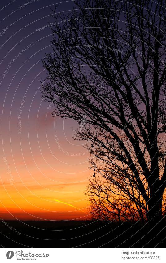 Gute Nacht! Baum Sonne blau rot Wolken gelb orange Ast Farbenspiel