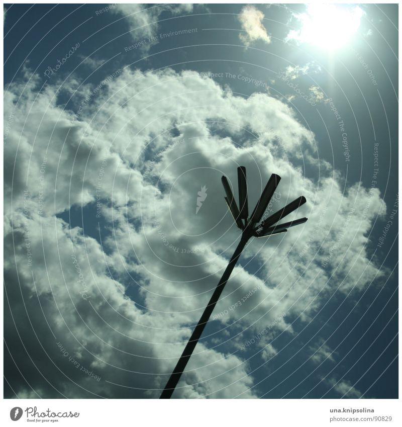 fleur II Sonne Himmel Wolken Blüte verrückt blau weiß Laterne Straßenbeleuchtung Beleuchtung zum licht hin Detailaufnahme Licht